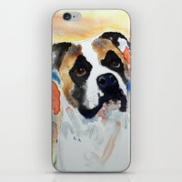 boxer iPhone & iPod Skins featuring Boxer by Bowles Fine Paintings