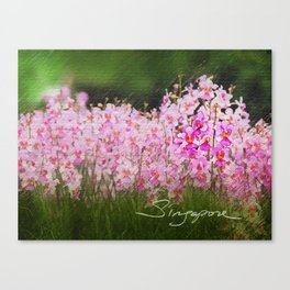 Vanda miss joaquim Canvas Print