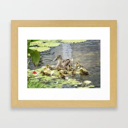 Mallard Family Framed Art Print