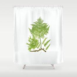 Pteridium aquilinum  by Thomas Moore Shower Curtain