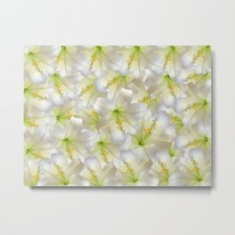 Cotton Seed Lilies Metal Print