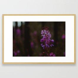 Fireweed Framed Art Print