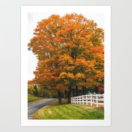 Vibrant Fall Foliage Maple Art Print