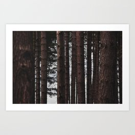 Through the Trees - Nature Photography Art Print