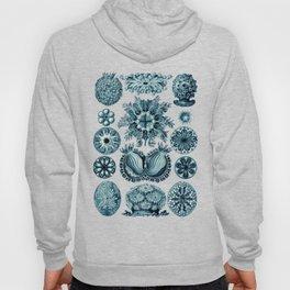 Ernst Haeckel Sea Squirts Cerulean Hoody