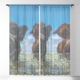 Bahamas Pigs Sheer Curtain