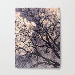 Cloudy Beech Metal Print