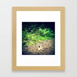 Lost Puppy Dog Framed Art Print