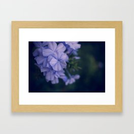 Activate the crown from the flowers of Hawaii Framed Art Print
