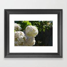 White Pedals Framed Art Print