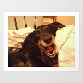 Laughing Doxie Art Print