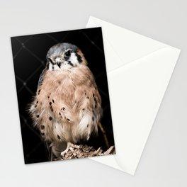 Desert Bird Behind Fence Stationery Cards