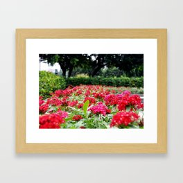 Flowers in Taipei Framed Art Print
