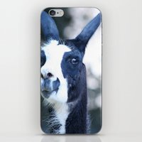 llama iPhone & iPod Skins featuring Llama by Veronica Ventress