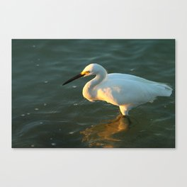 In The Evening Sun Canvas Print