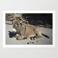 donkey Art Prints featuring Donkey  by Rob Hawkins Photography