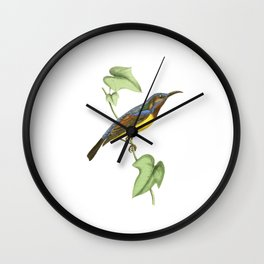 Javanese Creeper Bird Illustration by William Swainson Wall Clock