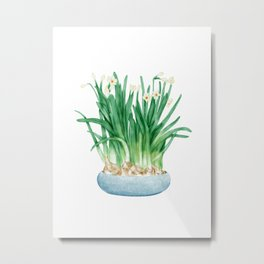 Watercolor Illustration of A pot of blooming narcissus Metal Print