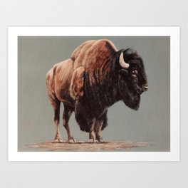 American Bison painting Art Print