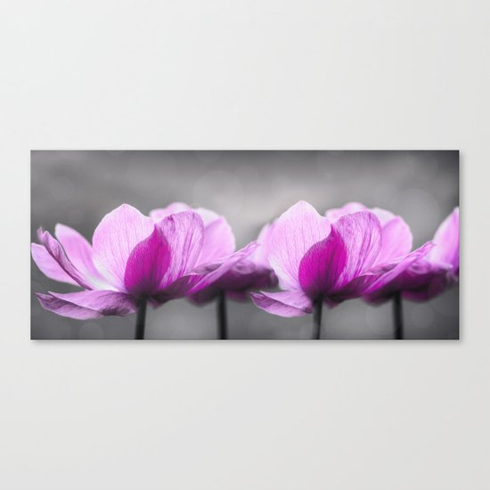 pink Anemone flowers on grey Canvas Print