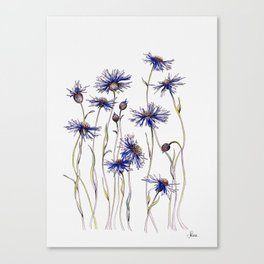 Blue Cornflowers, Illustration Canvas Print