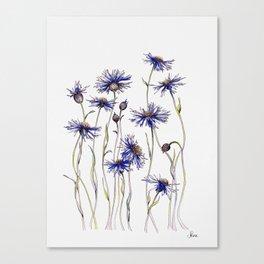 Blue Cornflowers, Illustration Canvas Print
