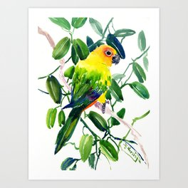 Sun Conure Parakeet, jungle tropical colors, parrot yellow deep green bright colored home decor Art Print