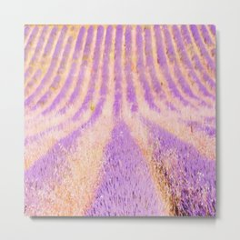 Field Of Lavender Provence France Metal Print