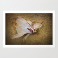 Beautiful Swan Song - Flower still life Art Print