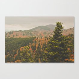 Evergreen Fall (Asheville, North Carolina, USA) Canvas Print