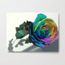 Beautiful rose flower Metal Print
