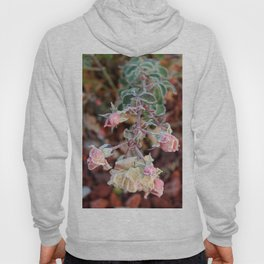 Cluster of Roses covered in Frost Hoody