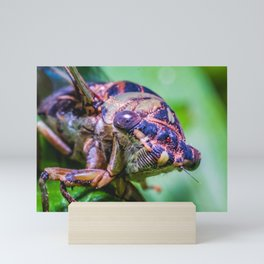 Cicada Macro Insect Photograph Mini Art Print