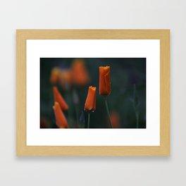 California Poppies at Dusk Framed Art Print