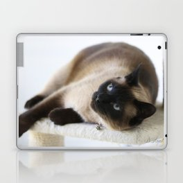 Sulley, A Siamese Cat Laptop & iPad Skin