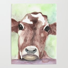 Cow portrait, farmhouse, country home, farm animal Poster