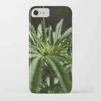 marijuana iPhone & iPod Cases featuring marijuana by andyskye