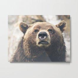 Animal Photography ~ Big Brown Bear Metal Print