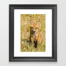 Red Fox kit Framed Art Print