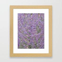 Lavender Field in Brussels Belgium Framed Art Print