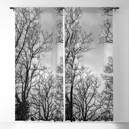 Black and white haunting trees Blackout Curtain