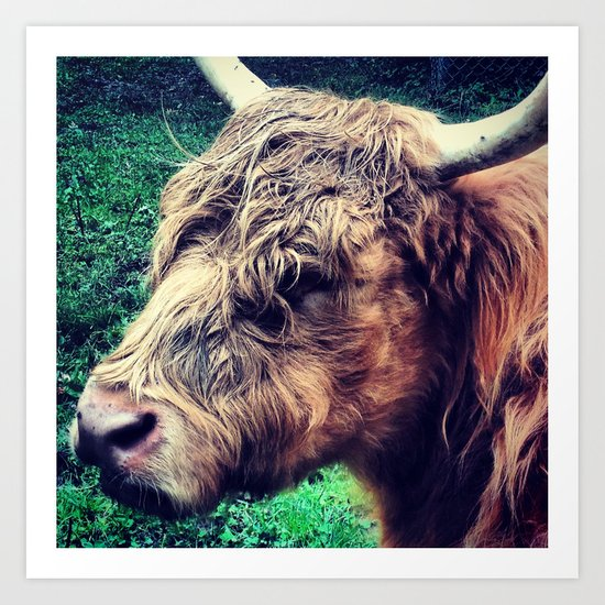 West Highland Cattle, High Park Zoo Art Print