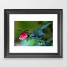 Rosebird Spreads her Wings Framed Art Print