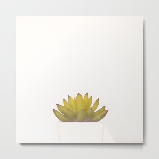 Cactus in flower pot on white background Metal Print