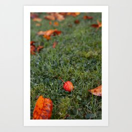Autumn crab apple Art Print