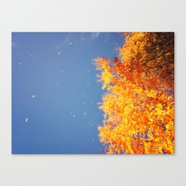 Autumn leaves in the wind Canvas Print