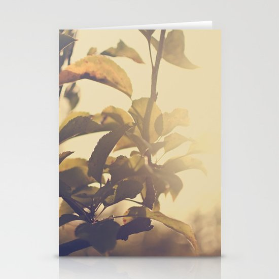 Fall Sun Stationery Cards