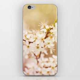 Blooming Cerasus cherry tree iPhone Skin