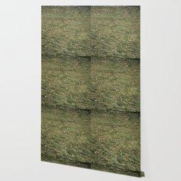 raked Wallpaper