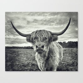 Highland Cow II Canvas Print